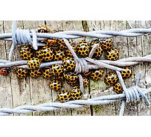Barbed Wire Wrap Photographic Print