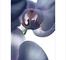 orchid V by narabia