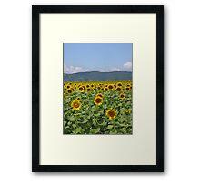 Girasole Framed Print