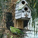 Green Parrot Duplex by Virginia N. Fred