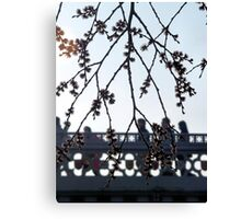 Spring blossom in the rush hour Canvas Print