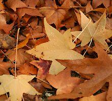 Fall has Fallen by Sarah Grace