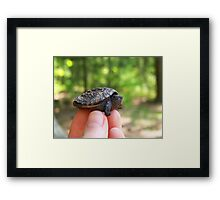 Baby Snapper Framed Print