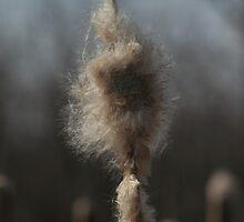 Fuzzy on a Stick by Stephen Thomas