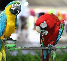 parrots giving directions! by Yannis-Tsif