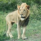 King of Africa by Ludwig Wagner