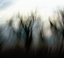 Breath of a Tree by Nikki Trexel