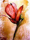 Flowers...Magnolia by © Janis Zroback