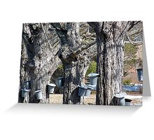 Maple Syrup Time Greeting Card