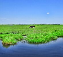 Lonely Hippo by vadim19
