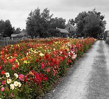 Dutch Flowers, in color by Matt Emrich
