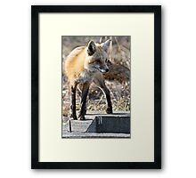 What a sporty little vixen Framed Print