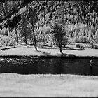 Madison River by Douglas Barnes