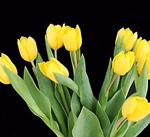 Yellow Tulips by franceslewis