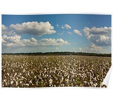 Land of Cotton Poster