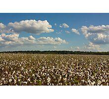 Land of Cotton Photographic Print