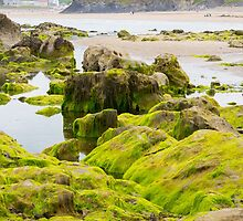 ballybunion castle algae covered rocks view by morrbyte