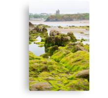 ballybunion castle algae covered rocks view Canvas Print