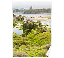 ballybunion castle algae covered rocks view Poster