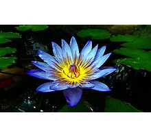 Water Lilly Two Photographic Print