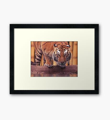 Crouching Framed Print