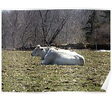 Mo's View of Bodacious Bovines 4 Poster