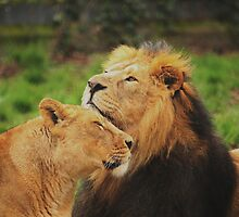 Wild Love by Franco De Luca Calce
