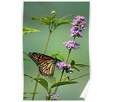 Delicate Monarch Poster