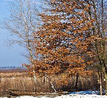 ~ One Tough Oak ~ by Tim Denny