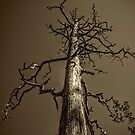 Dead Tree Near Sedona Arizona by Roger Passman
