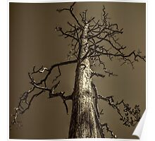 Dead Tree Near Sedona Arizona Poster