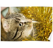 Tabby Cat and Yellow Tinsel 8 Poster