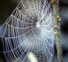 O' what a tangled web we weave.... by Nancy Richard
