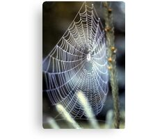 O' what a tangled web we weave.... Canvas Print