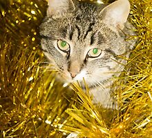 Tabby Cat and Yellow Tinsel 9 by AnnArtshock