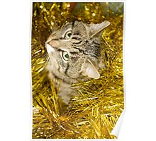 Tabby Cat and Yellow Tinsel 10 Poster