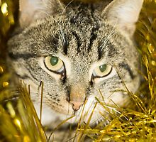 Tabby Cat and Yellow Tinsel 11 by AnnArtshock