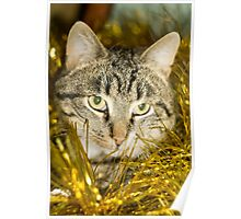 Tabby Cat and Yellow Tinsel 11 Poster