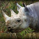 BLACK RHINO by CRYROLFE