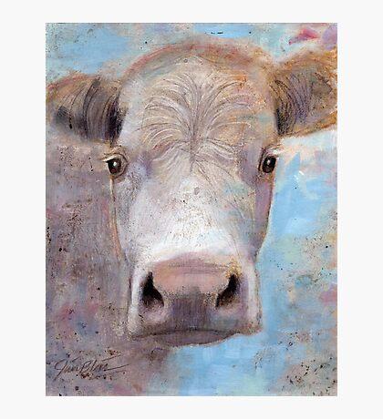 White Cow Photographic Print