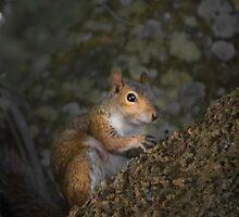 Squirrel by designingjudy