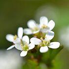 Tiny Macro Flowers by Prettyinpinks