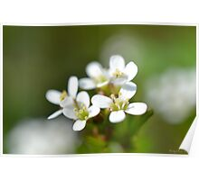 Tiny Macro Flowers Poster