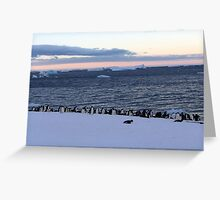 Adelie Penguin Sunset Greeting Card