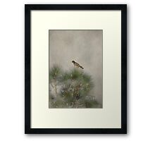 Hawk in the Treetop Framed Print