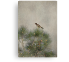 Hawk in the Treetop Canvas Print