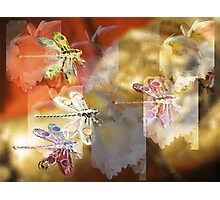 Flight of the dragonflies Photographic Print
