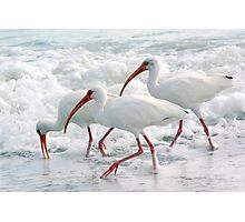 White Ibis in Foam Photographic Print