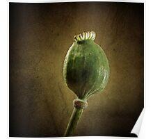 Poppy seed capsule Poster