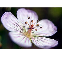 Wildflower 1 Photographic Print